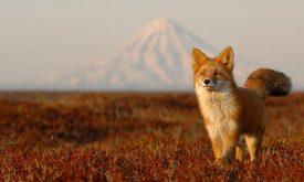 Banyak Hal Menakjubkan Pada Kamchatka Yang Ada Di Rusia